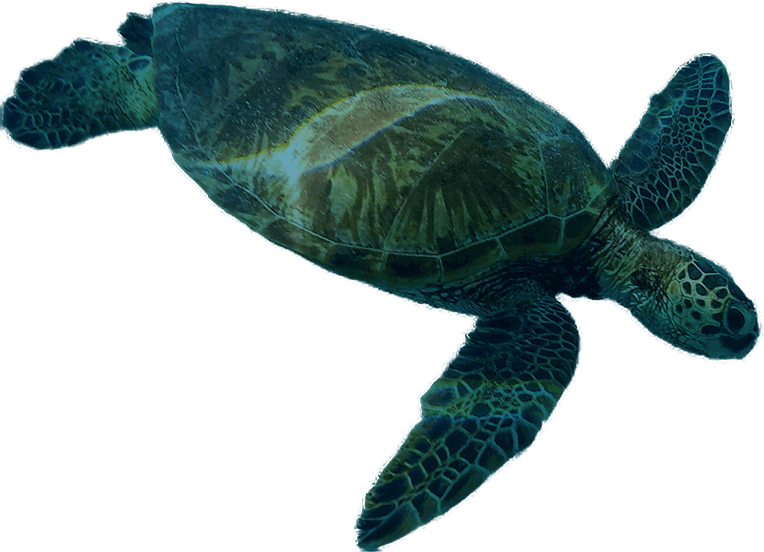 Blue and green sea turtle